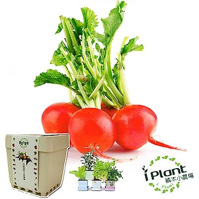 iPlant積木農場-櫻桃蘿蔔