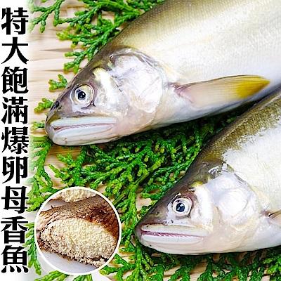 (滿699免運)【海陸管家】特選宜蘭帶卵母香魚1尾(每尾約195g)