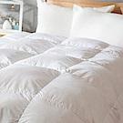 戀家小舖 / 雙人加大棉被  天然水鳥羽絲絨被-兩色  輕盈透氣  蓄熱保暖  台灣製