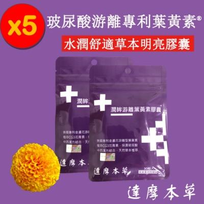 (時時樂折價券後2099)【達摩本草】玻尿酸游離型葉黃素膠囊(30顆/包,5包入)