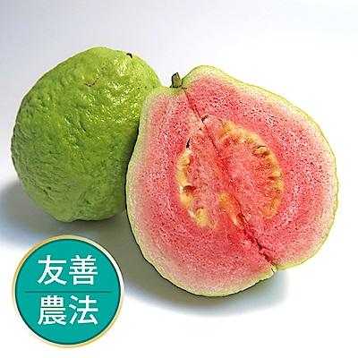 【果物配-任699免運】紅心芭樂600g.友善農法(2~3顆)