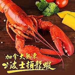 【愛上新鮮】熟凍波士頓龍蝦3隻裝(325g±10%/隻)