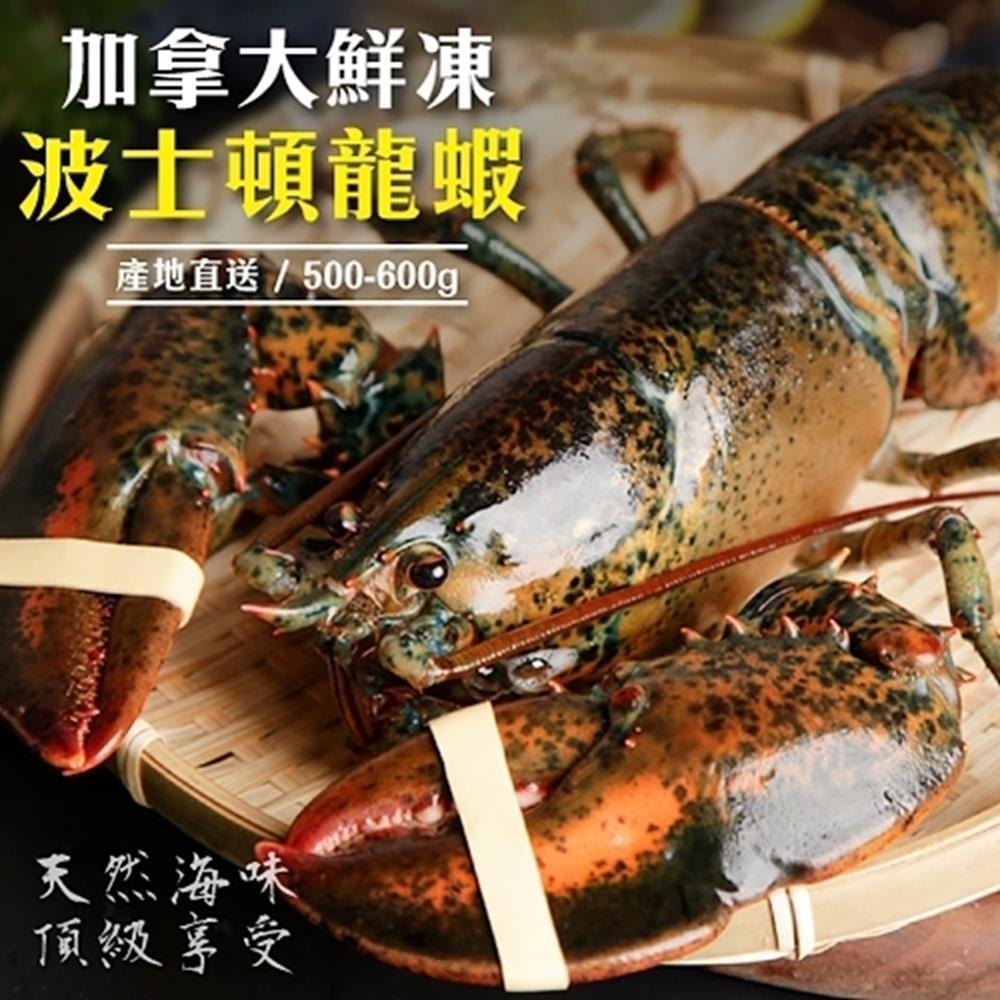 【海陸管家】加拿大波士頓螯龍蝦(每隻500g-600g) x1隻