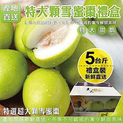 【天天果園】LV等級特大顆網室雪蜜棗禮盒 x5斤