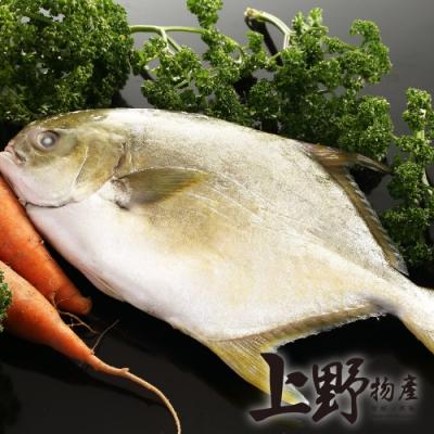 【上野物產】年菜-澎湖野生黃金鯧x2隻(650g土12%/隻)