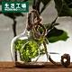 【百貨週年慶暖身 全館5折起-生活工場】淨透微光燈工球型花器 product thumbnail 1