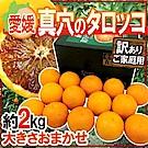 【天天果園】日本愛媛縣血橙2kg原裝盒(10-12入)