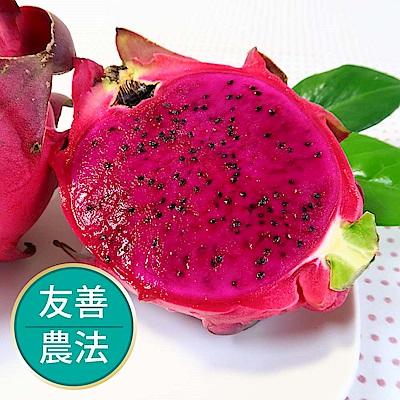 【果物配】紅肉火龍果.友善農法(3kg/4-5顆入)