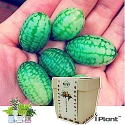 iPlant積木農場-西瓜