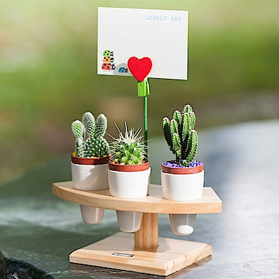 My Garden療癒植物容器 多肉精靈系列/盆栽手捲架/1吋*3孔-DY607