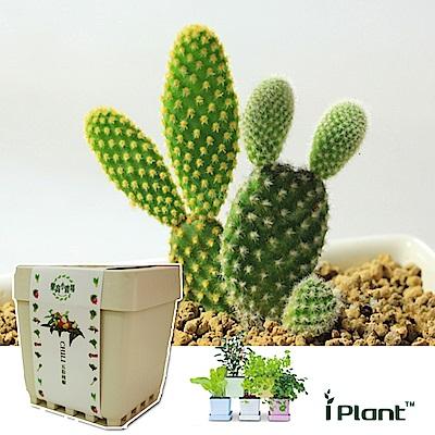 iPlant積木農場-仙人掌