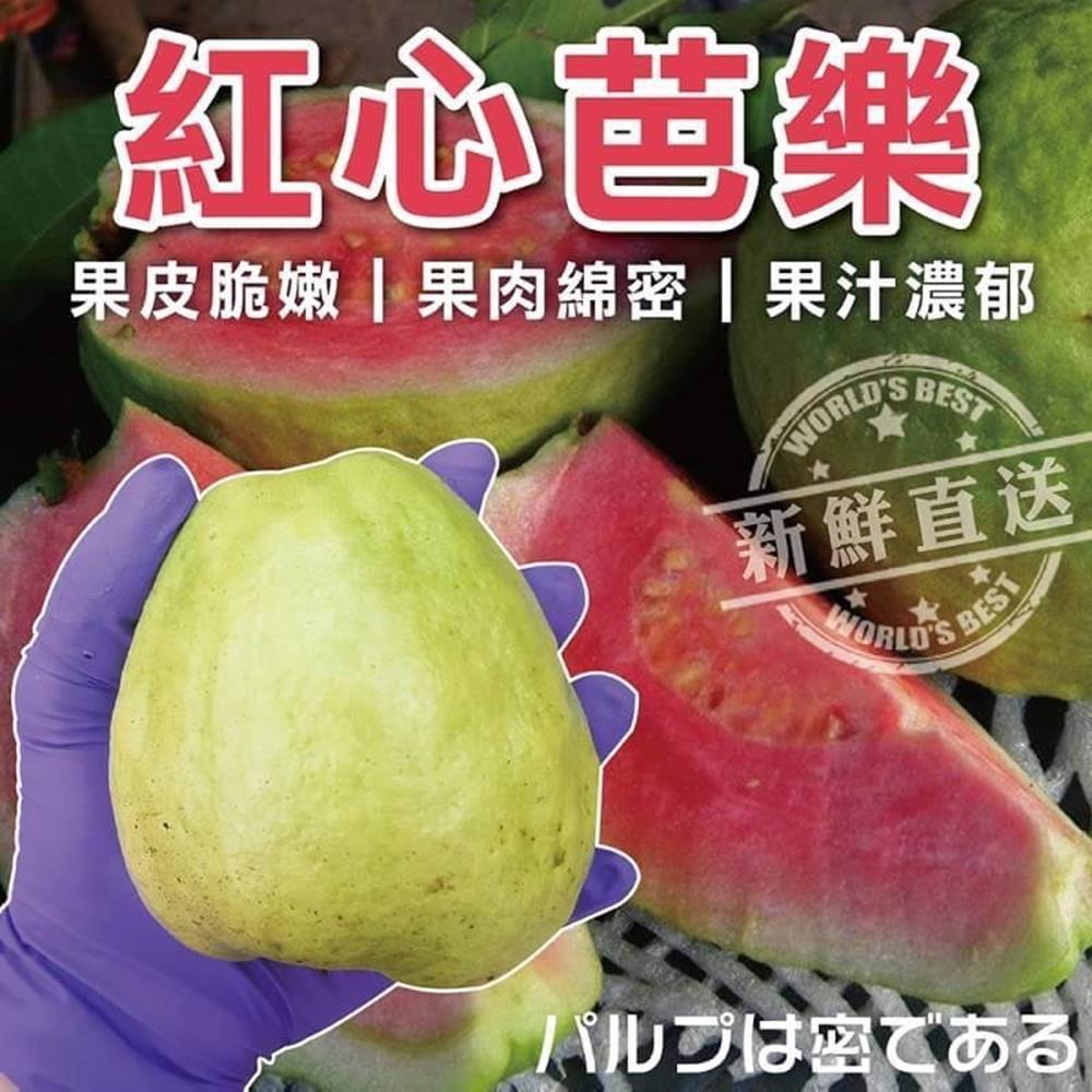 【天天果園】燕巢紅心芭樂 x3斤