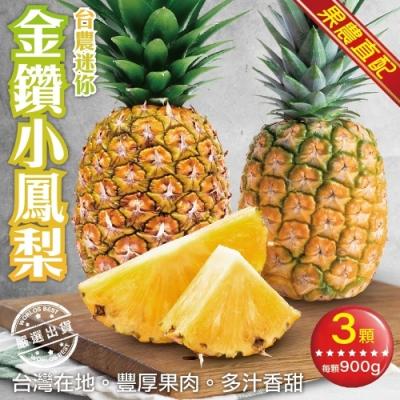 【果農直配】台農迷你金鑽小鳳梨3支(每支約900g)