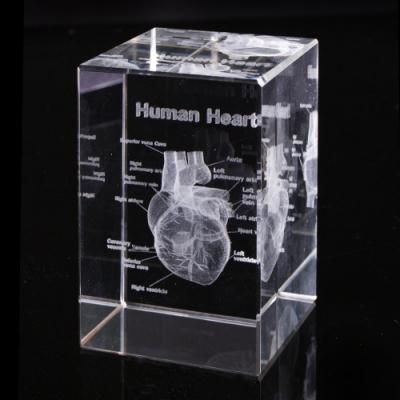 賽先生科學 透視心臟水晶紙鎮