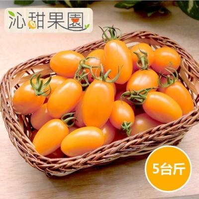 沁甜果園SSN‧橙蜜香小番茄(5斤/盒)