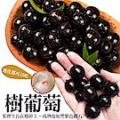 【天天果園】台灣嚴選樹葡萄 x5斤