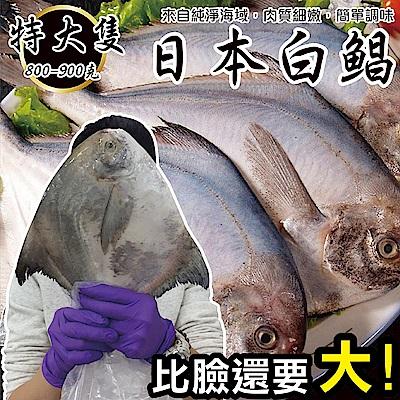 【海陸管家】日本特大2XL白鯧魚(每隻約800g) x1隻