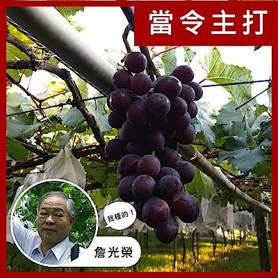 【果物配】巨峰葡萄禮盒.產銷履歷(2kg)