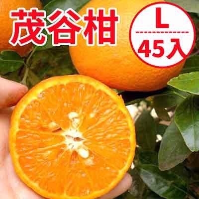 [甜露露]台灣茂谷柑L大顆45入宅配箱(15斤)