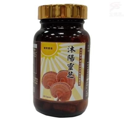 金德恩 台灣製造 SGS認證沐陽養生食品松杉破壁靈芝膠囊1瓶100粒