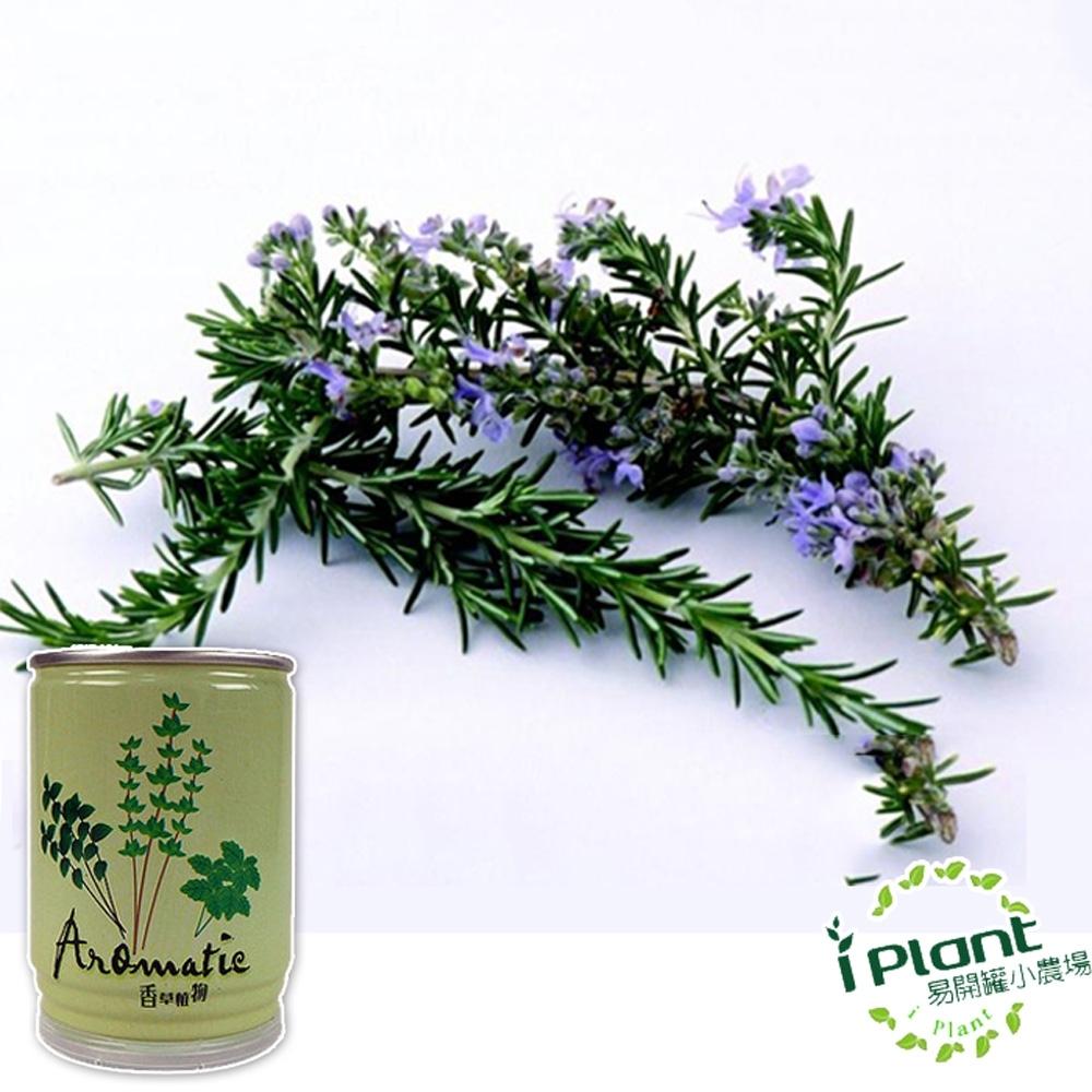 【 iPlant 】易開罐頭小農場-迷迭香