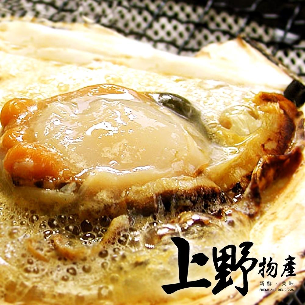【上野物產】北海道直送 新鮮帶殼大扇貝 (500g土10%/包)x10包