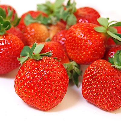 【愛上水果】日本空運草莓禮盒*1組(2小盒/500g/約16-20顆/組)