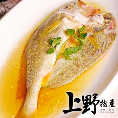【上野物產】野生黃魚一夜干(350g±10%/隻)x2隻