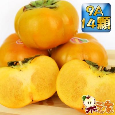 果之家 產地嚴選新社香濃多汁9A甜柿14粒禮盒(單顆8-9兩,約7.5台斤)