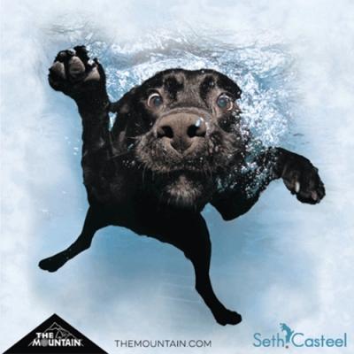 摩達客-美國The Mountain 水中拉布拉多黑狗兄 純棉環保短袖T恤