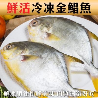 【海陸管家】大尾野生黃金鯧3尾(每尾約650g)