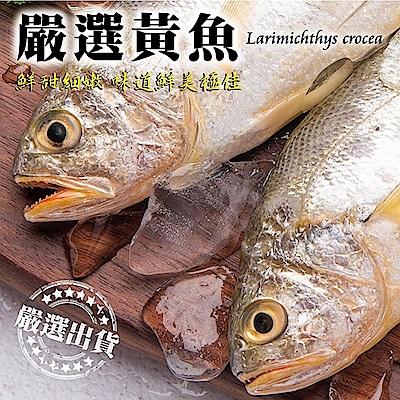 (滿699免運)【海陸管家】巨無霸野生深海黃魚 1尾(每尾約600-700g)