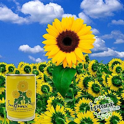 【 iPlant 】易開罐頭小農場-向日葵