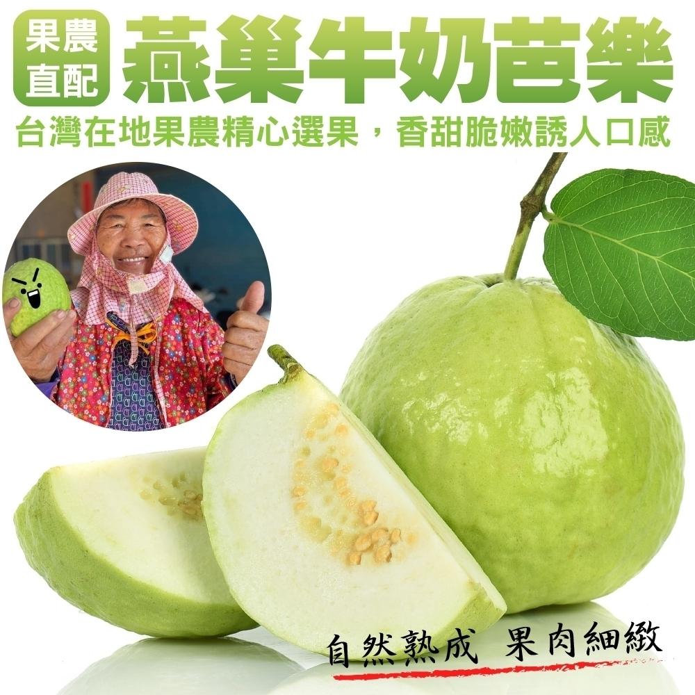 【果農直配】燕巢牛奶珍珠芭樂10斤(含箱重/16-25顆)