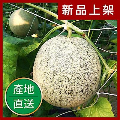 【果物配】台南13號洋香瓜禮盒.友善農法(3kg/2顆入)