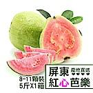 【產地直送】屏東高樹紅心芭樂5台斤X1箱(8-11顆/箱)