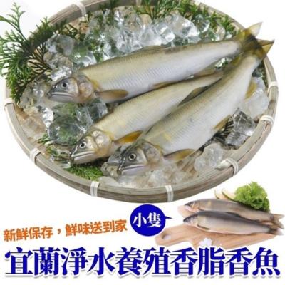 (滿699免運)【海陸管家】特選宜蘭帶卵母香魚1尾(每尾約70g)