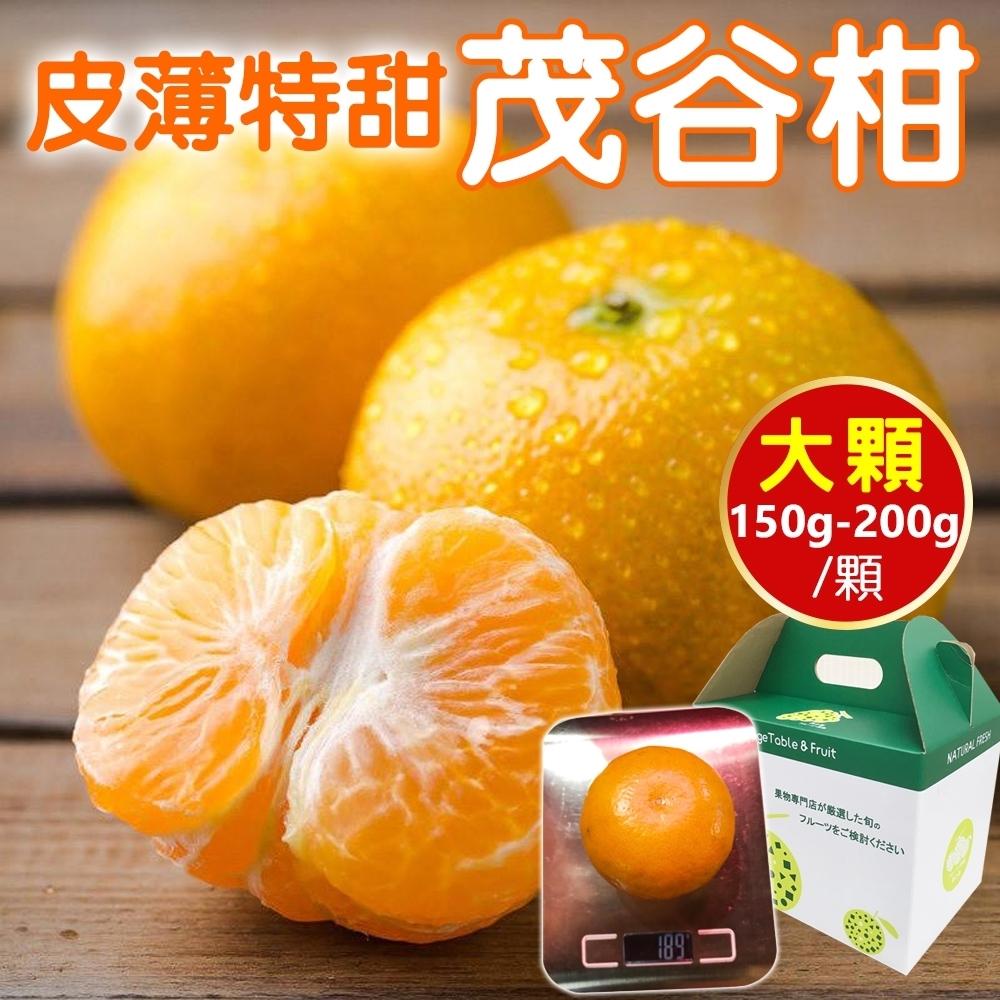 【天天果園】澳洲黃金茂谷柑40顆(每顆約180g)