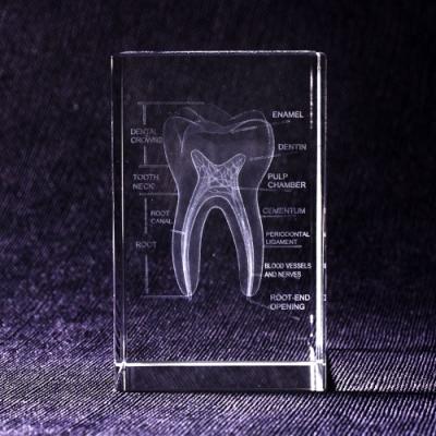 賽先生科學 透視牙齒水晶紙鎮