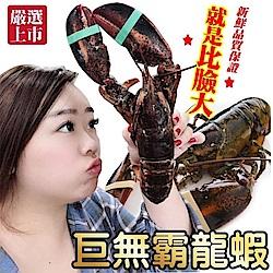 買1送1【海陸管家】加拿大波士頓螯龍蝦(每隻400g-500g) 共2隻