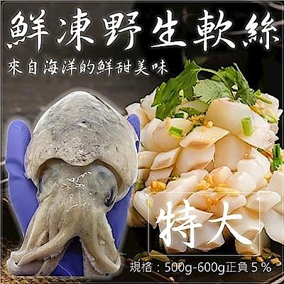 (滿699免運)【海陸管家】鮮凍野生特大軟絲(每隻約500g-600g) x1隻