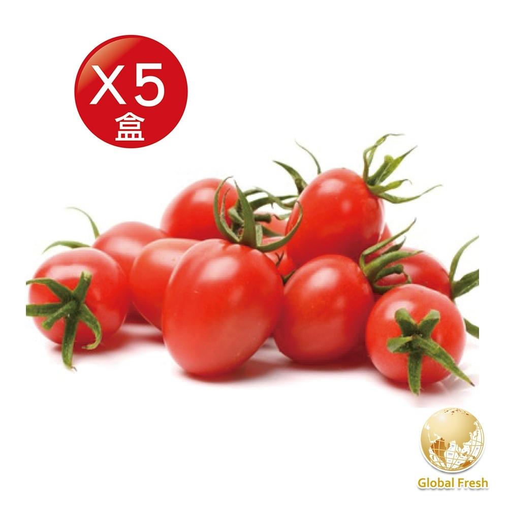 Global Fresh-力信國際 高CP值、四季水果首選-聖女番茄(450g/盒,5盒/箱)