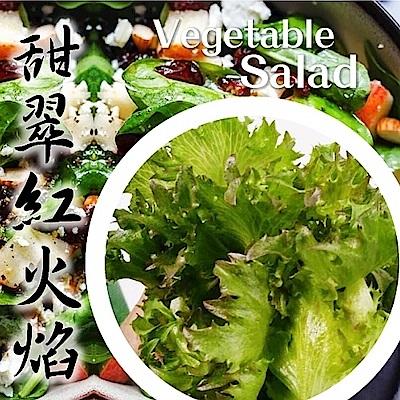 (任選12朵)【天天果園】台灣小農溫室萵苣-甜脆紅火焰(約110g)
