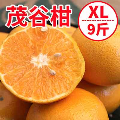 [甜露露]台灣茂谷柑XL超大顆9斤禮盒
