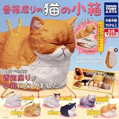 【T-ARTS】扭蛋轉蛋 貓咪香箱坐姿 小物收納盒 一組6入