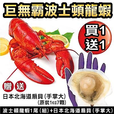 【海陸管家】海鮮雙拼組-波士頓龍蝦+北海道大扇貝