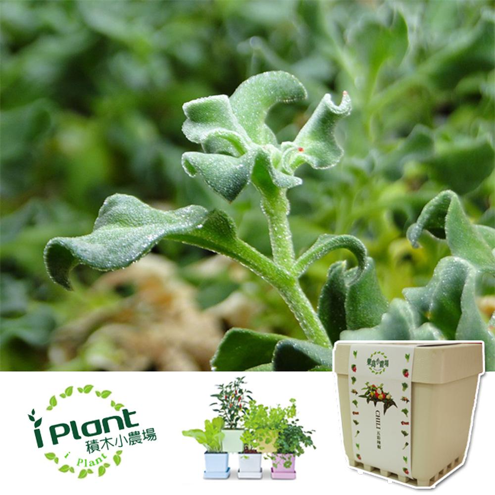 iPlant 積木農場-冰花菜