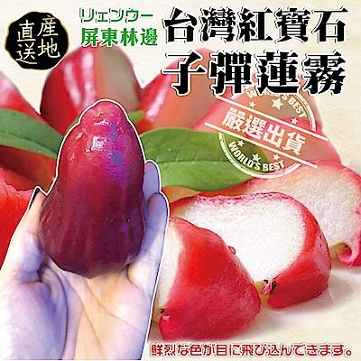 【天天果園】嚴選台灣子彈蓮霧12顆(每顆約120g)