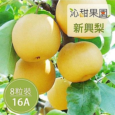 沁甜果園SSN 苗栗卓蘭新興梨(16A,8粒裝)