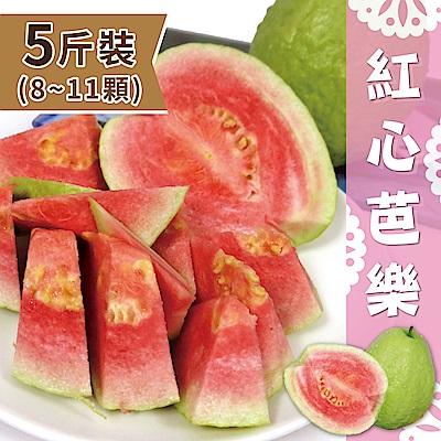 家購網嚴選 精選紅心芭樂5斤裝/盒 (8~11顆)